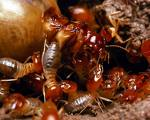 The Happy Termite Family
