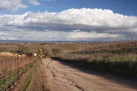 Rocky Rabbit Vineyard in Paso Robles